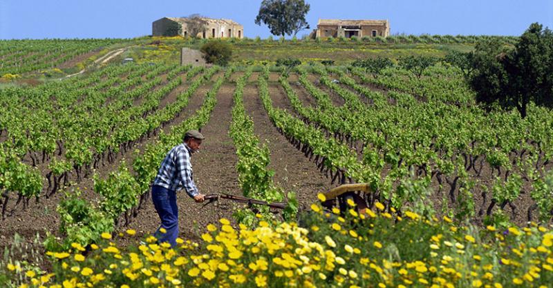 Risultati immagini per agricoltura lavoro